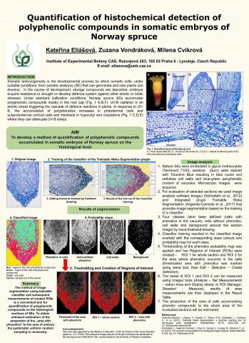 Quantification of polyphenolic compounds on histological sections
